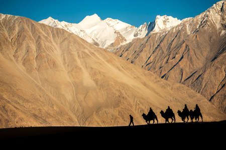 silhouette of caravan travellers riding camels Nubra Valley Ladakh ,India photo