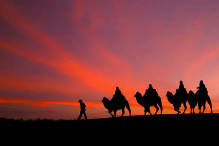 camel silhouette: great sky and caravan travelers riding camels