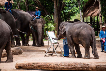 Lampang Thailand  June 7 2015 : Daily elephant show at The Thai Elephant Conservation Center TECC Mahout train elephant drawing a picture. Lampang Thailand.