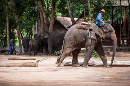 forestry: Lampang Thailand  June 7 2015 : Daily elephant show at The Thai Elephant Conservation Center TECC mahout show how to train elephant in forestry industry. Lampang Thailand.