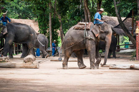 forestry industry: Lampang Thailand  June 7 2015 : Daily elephant show at The Thai Elephant Conservation Center TECC mahout show how to train elephant in forestry industry. Lampang Thailand.