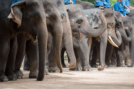 forestry industry: mahout show how to train elephant in forestry industry.