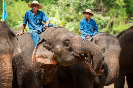 mahout: Elephant show and training with mahout. Lampang Thailand.