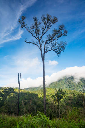 soi: Big tree in the rain forest and blue sky Phu Soi Dao National Park Thailand. Stock Photo