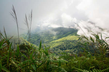 soi: Scenic view of foggy over the mountain after rain Phu Soi Dao National Park Thailand.