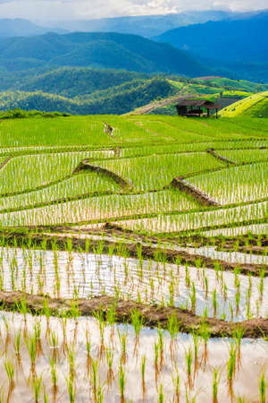 terraced field: Terraced rice field in Pa Pong Pieng. Chiang Mai ,Thailand. Stock Photo