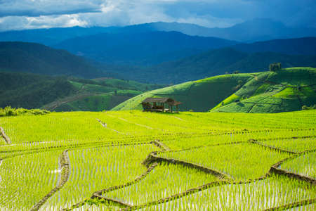 pa: Terraced rice field in Pa Pong Pieng. Chiang Mai ,Thailand. Stock Photo