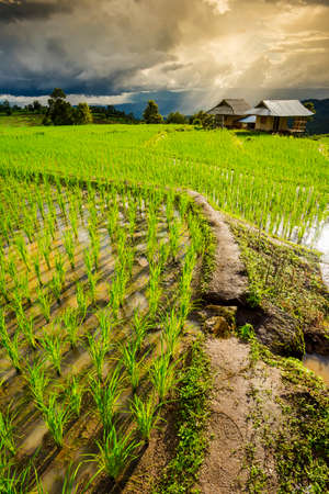 pa: Terraced rice field with sun rays and dramatic sky in Pa Pong Pieng. Chiang Mai ,Thailand.