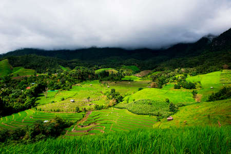 pa: Terraced rice field in Pa Pong Pieng. Chiang Mai ,Thailand. Selective focus.