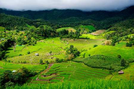 pong: Terraced rice field in Pa Pong Pieng. Chiang Mai ,Thailand. Stock Photo