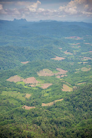 invade: Forest encroachment to plant corn Tak ,Thailand.