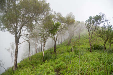Trees on the top of mountain in the mist Tak ,Thailand.