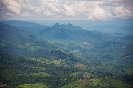encroach: Forest encroachment to plant corn Tak ,Thailand.