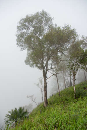 ramantic: Trees on the top of mountain in the mist Tak ,Thailand.