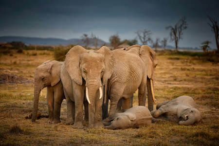 Group of Elephants Sleeping National Park