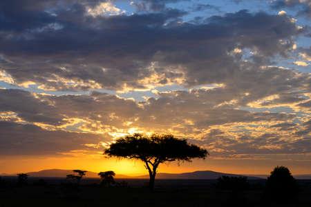 Sunset view in savannah ,Kenya.