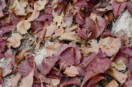 Herfst grens van geel Stockfoto