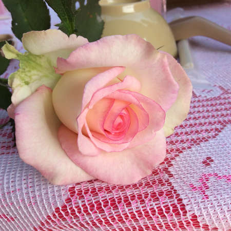 Rose van het frame