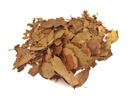 bay leaf: Dried Bay leaf isolate