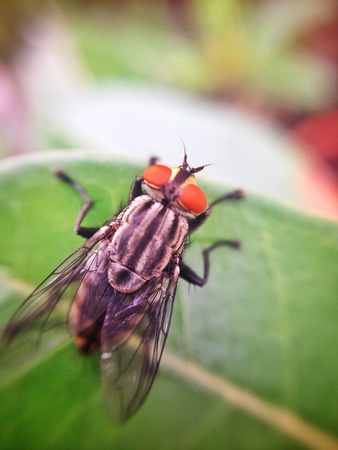 photographies: fly on leaf Stock Photo