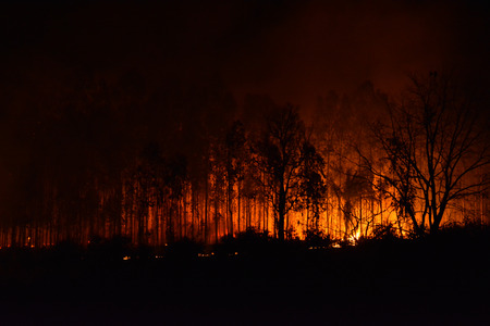 bush fire: Forest Fire, the wildfire burning tree in red and orange color at night.