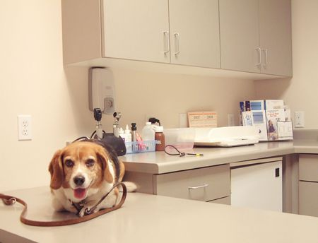 visit to the vets Stock Photo