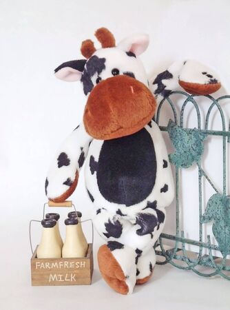 Milkman cow rests for a chat