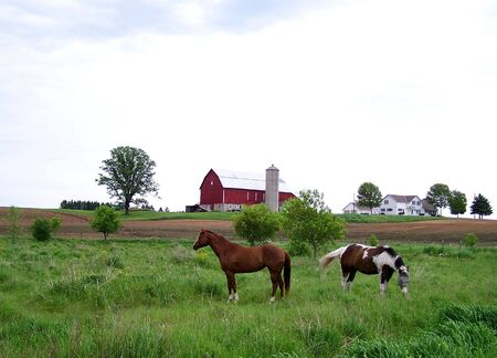 Horses in Field Stock Photo