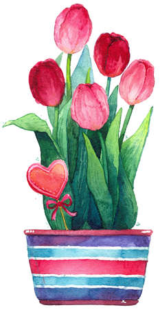 Watercolor pink tulips in a pot