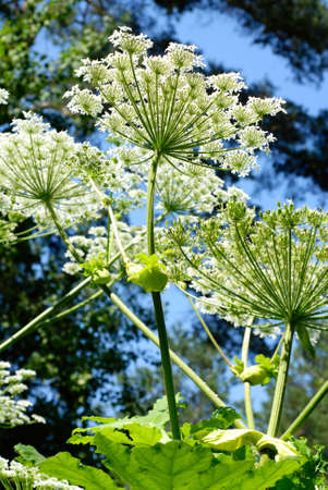 forest plants with white flowers photo