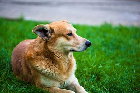 Die streunenden Hund Lizenzfreie Bilder