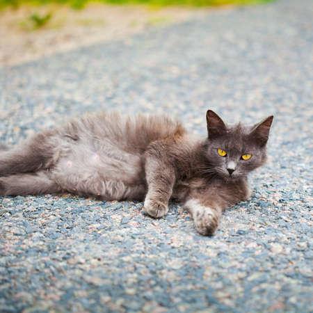 pezones: Gato negro con ojos amarillos en el suelo