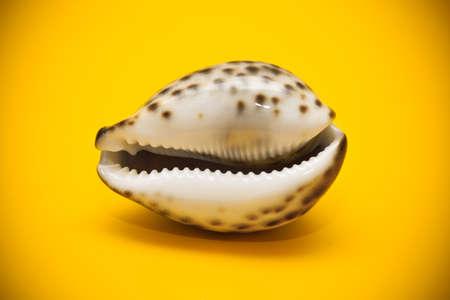 Marine Schale close-up