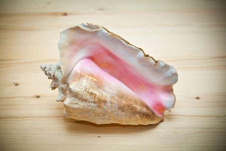 gro�e Muschel auf einem Holzbrett