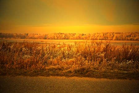 Rustic autumn landscape. at sunset. Autumn grass, forest, field