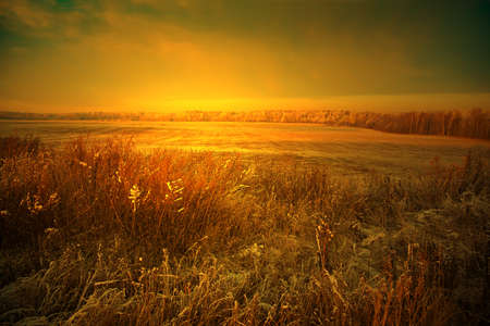 Field of dry grass in the foreground - a beautiful landscape at sunset, orange tones