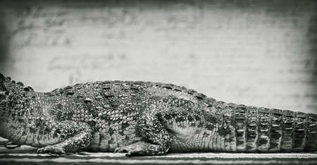 The body of a crocodile. Vintage style