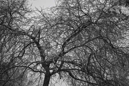 sullenly: fantastic wood texture. Background of the branches of a bare tree. Gloomy mood pictures. Stock Photo