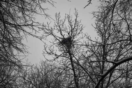 Bird nest on the tree. Dark branches of the forest trees against the grey twilight sky