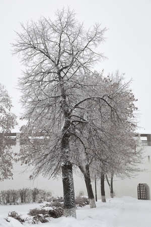 Cold winter landscape - icy leafless trees