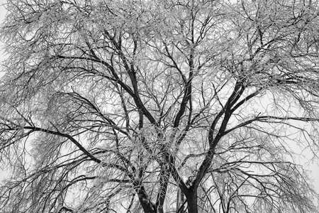 Tree, covered with ice and frost. Winter natural background. the texture of the tree branches