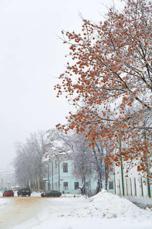 winter city landscape, beautiful maple in the foreground