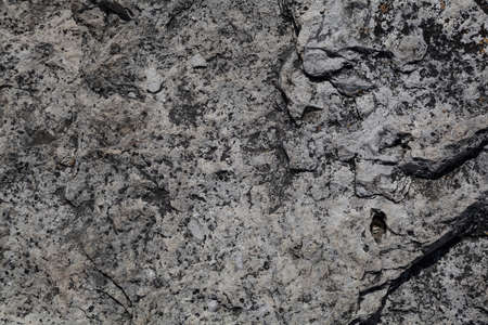 texture of gray stone. Background, blank space for design. Abstract stone surface close-up