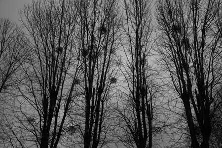 Grim landscape - trees and nests against the background of the night sky