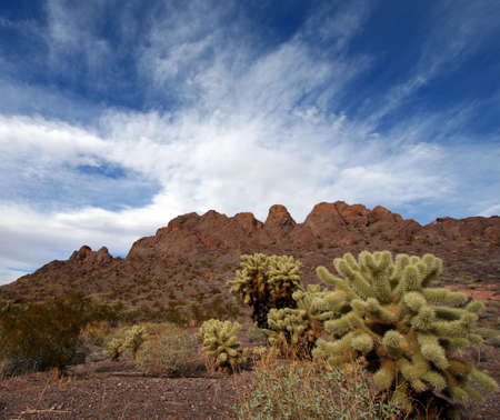 Desert Landscape with Cactus, Mountains and Blue Sky Stock Photo