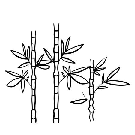 Handdrawn Bamboo Plant doodle style vector isolated Background