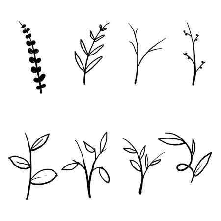 collection of Vector branches and leaves. Hand drawn floral elements. Vintage botanical illustrations. vector 向量圖像