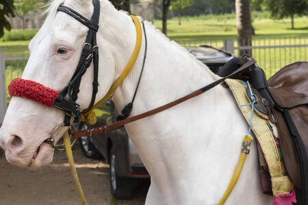An ornate white horse is ready to take the rider. He has a saddle on his back. Travelers ride on this horse in Srirangapatna, Karnataka, India.