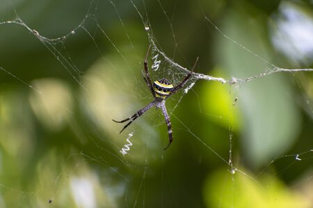 Closeup photo of a big spider sitting on the web at the rain-forest on isolated background