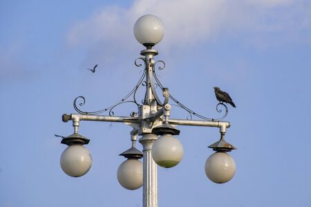 The isolated vintage lamp on an iron column against the blue sky where a hawk bird sits for hunting Standard-Bild - 140223452